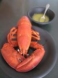 Lobstar_002_2